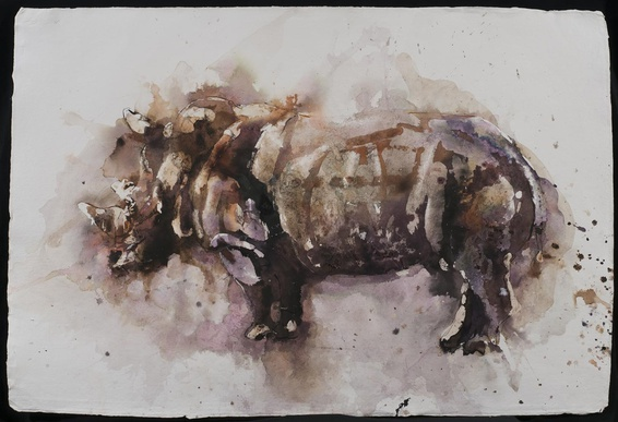 Paul Richards, Rhinoceros, 2014